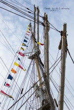 The Tall Ships Races 2016 - Antwerp